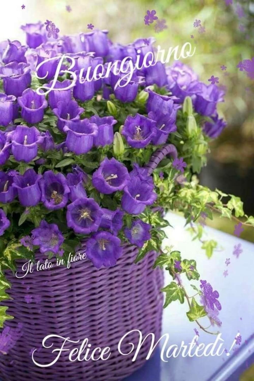 buon martedì immagini nuove gratis (2)