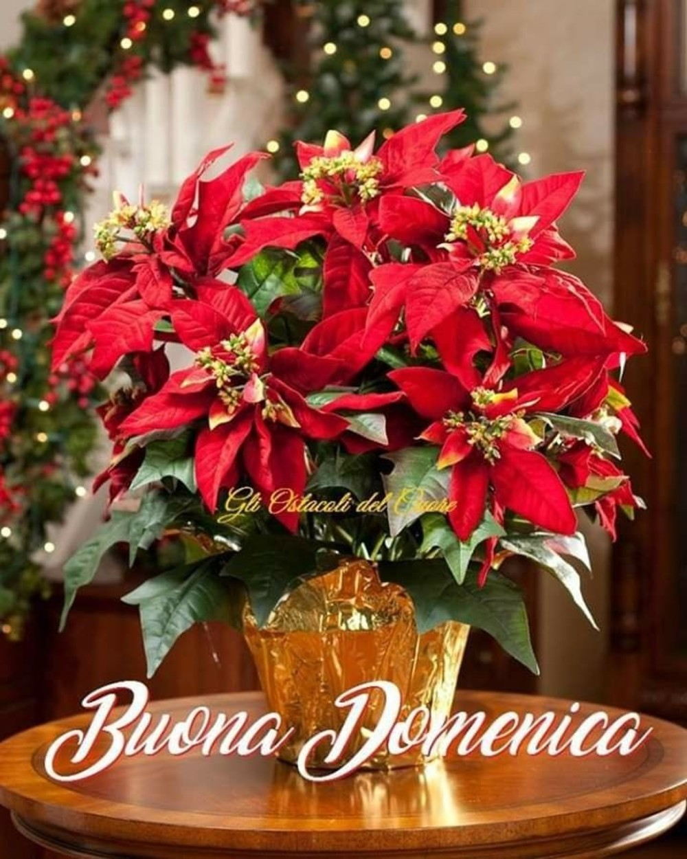 Immagini Natalizie Buona Domenica.Buona Domenica Stella Di Natale Buongiornocolsorriso It