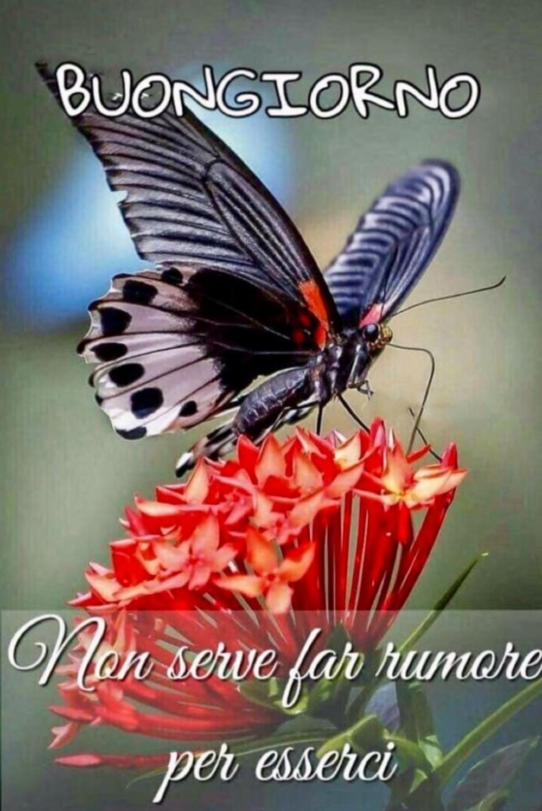Buongiorno Con Bellissima Farfalla Su Fiore