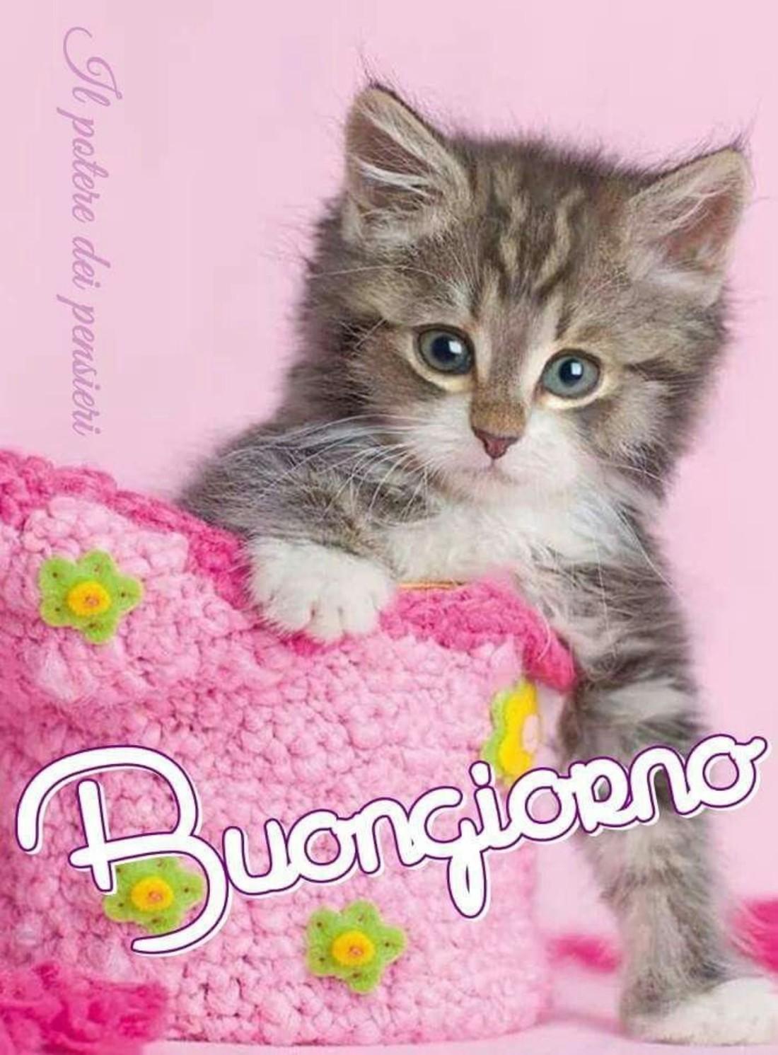 Buongiorno Con Tenero Gattino Buongiornocolsorrisoit