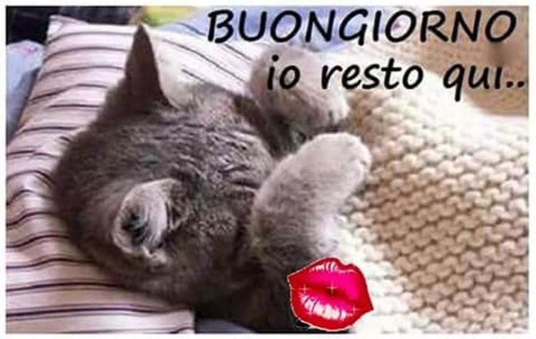 Dolce Buongiorno Gattino 4 Buongiornocolsorriso It
