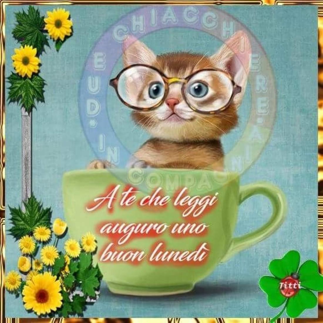 Immagini Buon Lunedi Con Gattini 1 Buongiornocolsorrisoit