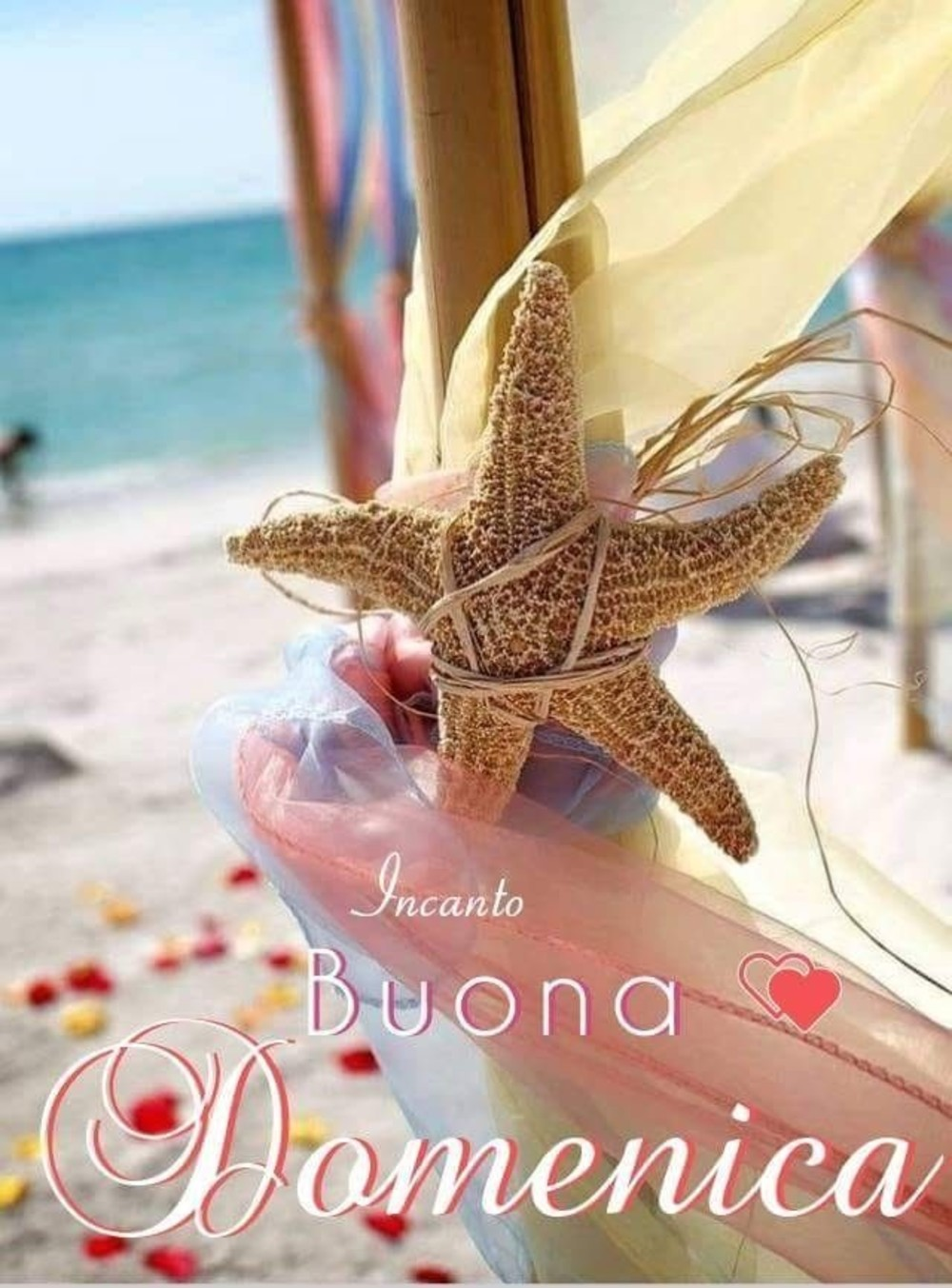 immagini buona domenica stella marina