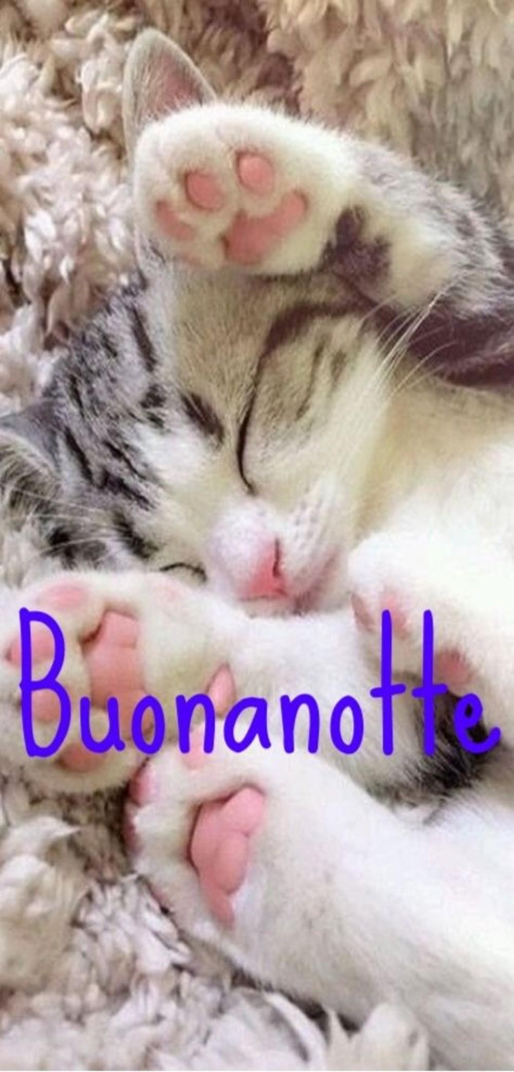 Immagini Buonanotte Gatti 2 Buongiornocolsorrisoit