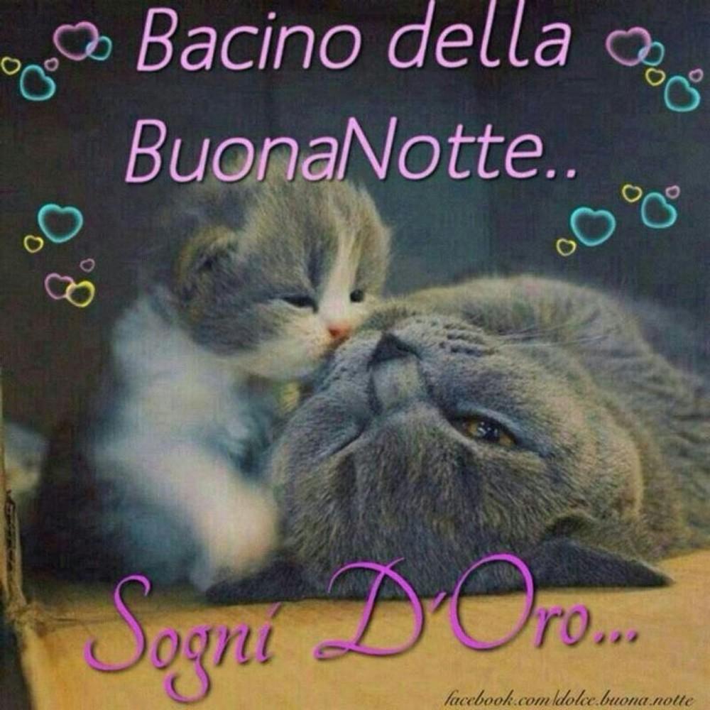 Immagini Buonanotte Gatti 3 Buongiornocolsorrisoit