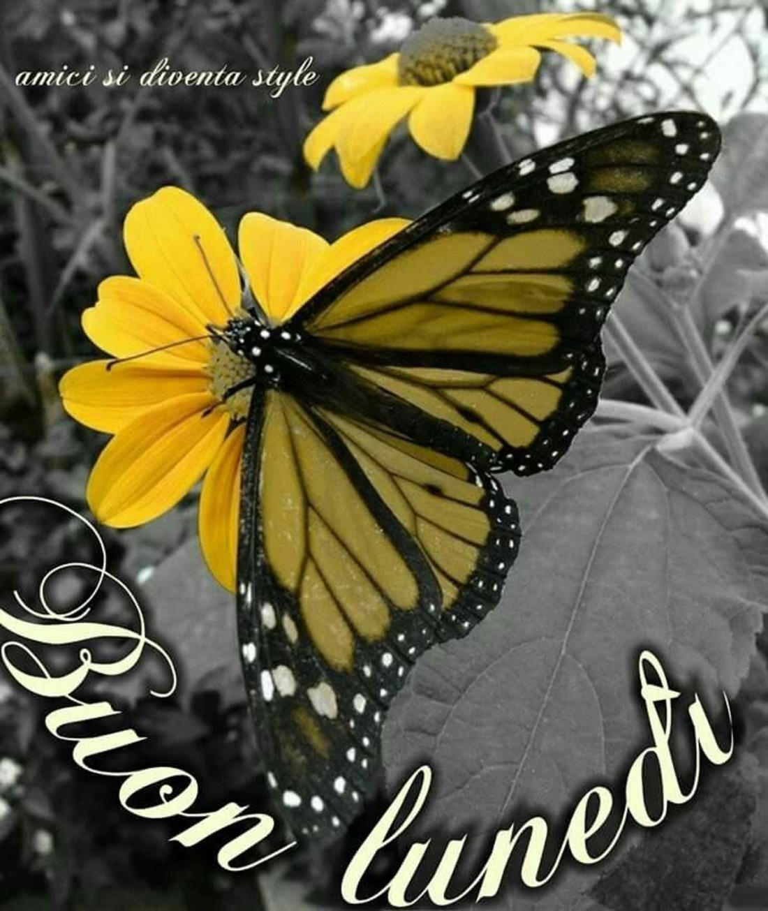 Immagini Buongiorno Buon Lunedi Farfalla