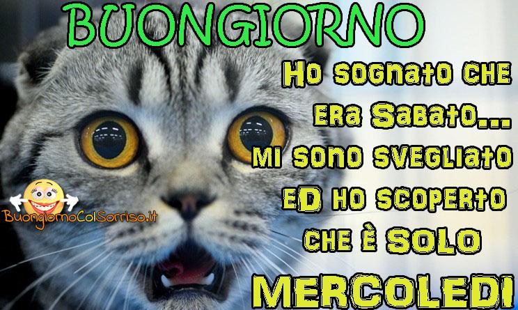 Immagini Buon Mercoledi Divertenti Con Gattini Buongiornocolsorrisoit