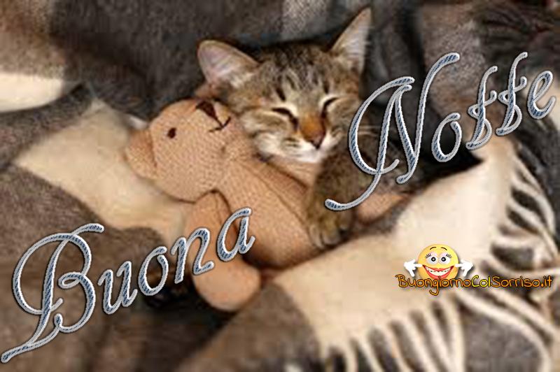belle immagini buonanotte teneri gattini