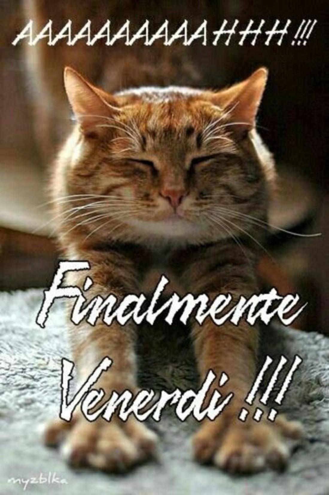 Immagini buon venerdi gattini for Immagini divertenti buongiorno venerdi