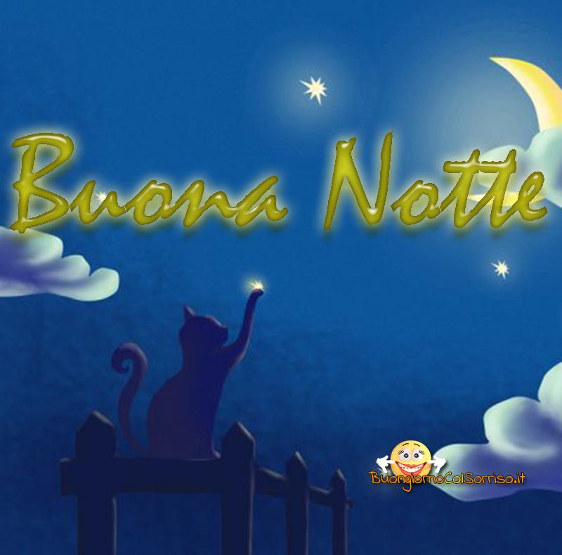 immagini buona notte dolci gattini
