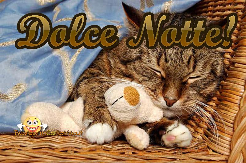 nuove immagini buona notte dolci gattini